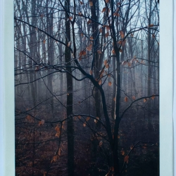 Susan Abrams: Misted Wood