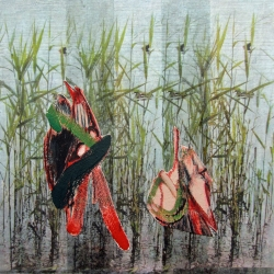 Rosalind Bloom: In the Reeds