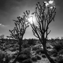 Christopher Brown: Evening Light Mojave Desert