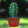 Untitled (small cactus 2)