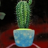 Untitled (small cactus 3)