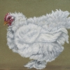 Eric Fausnacht: 12-white-frizzle-feather-legged-2007