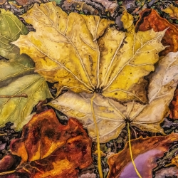 Gary Grissom: Two Yellow, Orange & Green Leaves
