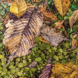 Gary Grissom: Purple, Yellow & Green Leaves