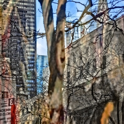 Tree Branches, Buildings, 5th Avenue