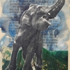 Glynnis Reed: Elephant Unchained