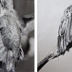 Lyn Godley: InFlight (detail prints 17, 31, 12, and 3)