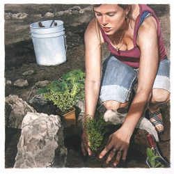 Mary Henderson: Planting