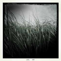Jeffrey E. Holder: from the Tidal Grasses series