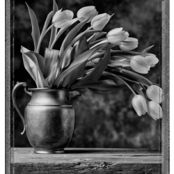 Fred Kenner: Tulips