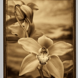 Fred Kenner: Orchids