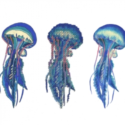 Alex Kuhn: Jellyfish