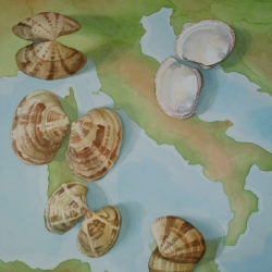 Lauren J. Sweeney: Mediterranean Cockle Shells
