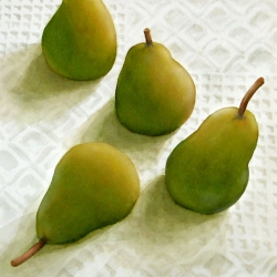 Lauren J. Sweeney: Pear Quartet