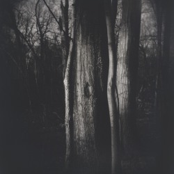 Laurie Beck Peterson: Carpenter Woods Trees