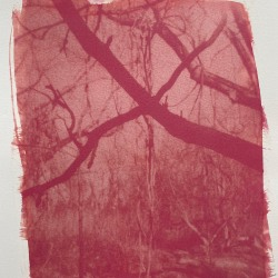 Laurie Beck Peterson: Crossed Trees