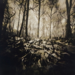 Laurie Beck-Peterson: Carpenter Woods Pinhole
