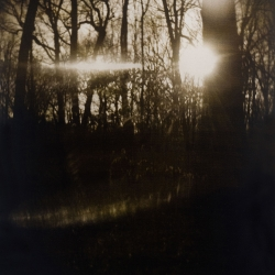 Laurie Beck-Peterson: Carpenter Woods Reflection