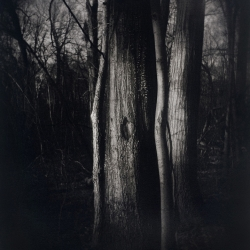 Laurie Beck-Peterson: Carpenter Woods Trees