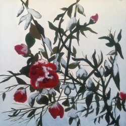 Mary Powers Holt: Snow Roses