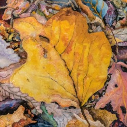 Gary Grissom: Large Yellow Leaf, on the Ground