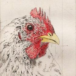 Scott Holford: Chicken, handcolored
