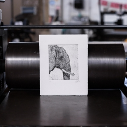 Scott Holford: Elephant Etching