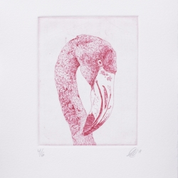 Scott Holford: Flamingo in Pink