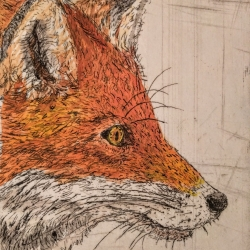 Scott Holford: Fox, handcolored