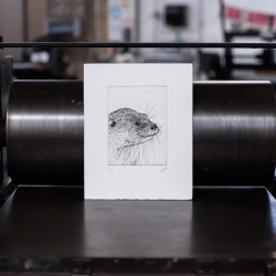 Scott Holford: Otter Etching