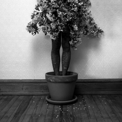 8-potted-tree