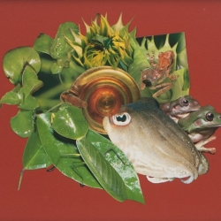 Annie Stone: Cuttlefish, Frogs and Leaf Bug