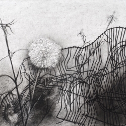Joan Wadleigh Curran: Fence