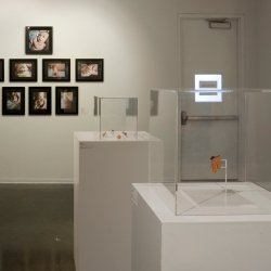 Installation shot from Nurture: Art and Life Connected exhibition